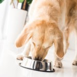 How to know how much to feed your dog?