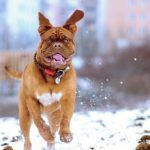 Feeding Your Pet in Winter: The Facts
