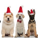 What Can I Feed my Dog at Christmas?