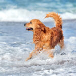 Tips For A Happy Healthy Dog By Olivia Parker